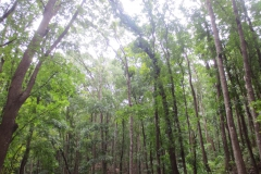 Man made forest
