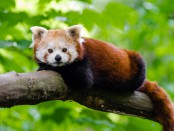 animal-branch-cute-145910