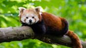 animal-branch-cute-145910
